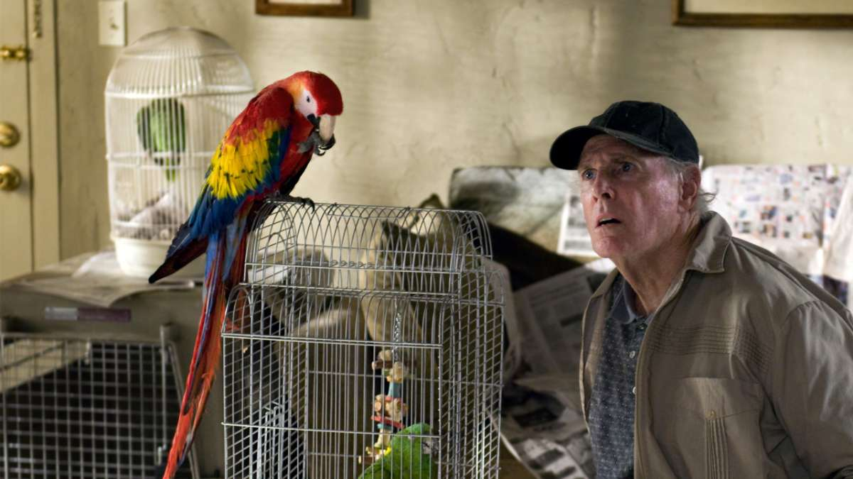 Frank Harlow looks at parrot