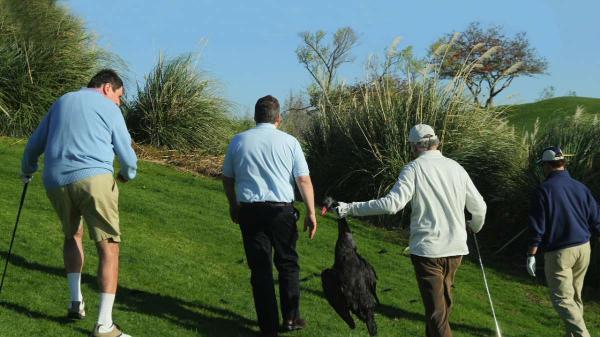Larry David and other golfers carry dead black swan